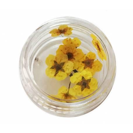 Купити Хоцветы для декору нігтів Nails World незабудка 02 - жовті
