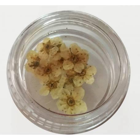 Купити Хоцветы для декору нігтів Nails World незабудка 01 - світло-жовті