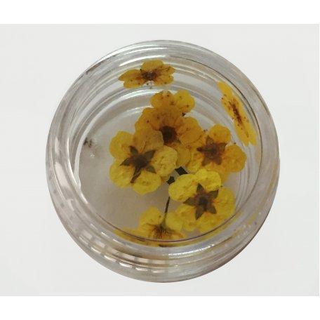 Купить Хоцветы для декора ногтей Nails World незабудка 02 - желтые