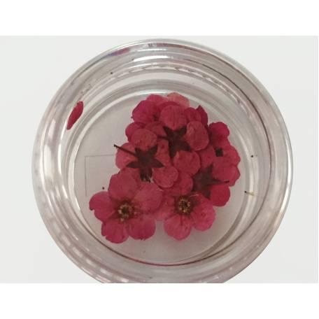 Купити Хоцветы для декору нігтів Nails World незабудка 04 - малинові